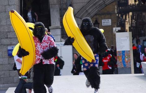 I can haz bananaz