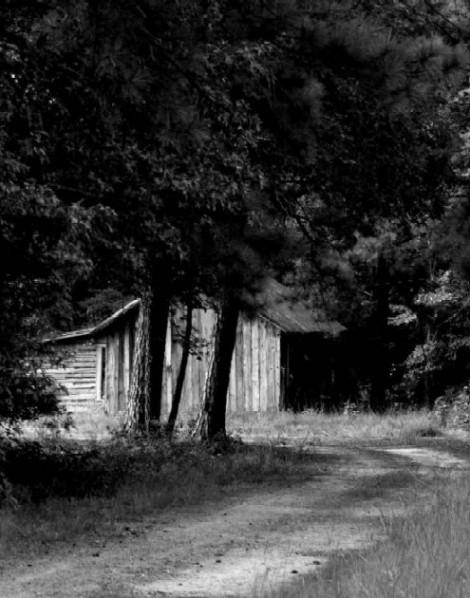 gwan Carolina in the pines