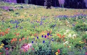 choosan flowers